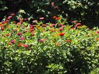 seminte de flori pt gradina