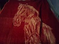 Patura cu cai