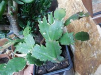 Lastari plante (3)