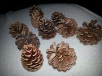 10 conuri de brad mici (pentru decoratiuni de iarna)