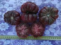 rosii negre gogosar - seminte (9)