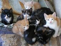 Ofer 5 pisicute de 2 luni