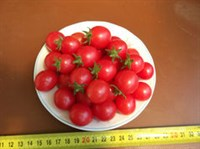 chery de ghiveci semicurgatoare rosii - seminte (3)