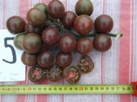 rosii chery negre - seminte (3)