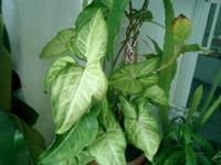 Pui plante de apartament
