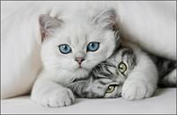 """""""Dadaca""""  pentru pisicute  :)"""