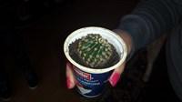 pui de cactus rotund