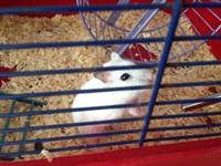 Donez hamster
