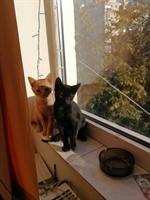 Pisici spre adoptie